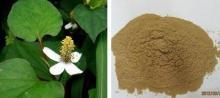 Herba  Houttuynia e Extract
