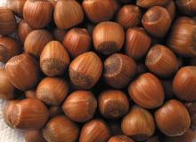 Hazelnut and other Nuts for sale