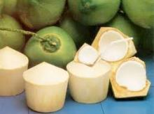 EXPORT FRESH COCONUT