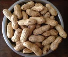 Jumbo Raw Peanuts (In Shell),Jumbo Roasted Peanuts (In Shell),Roasted Virginia Peanuts