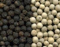 Black Pepper 500g/L-550g/L