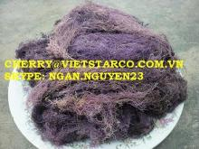 GRACILARIA FOR PRODUCING AGAR