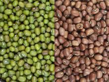 2014 new crop Green Mung bean,good price