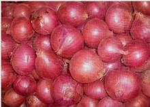 2014 new crop fresh red onion