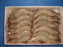 Frozen Seafood Shrimp Vannamei