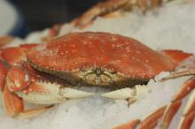 Frozen King Crab available
