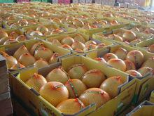 Fresh Pomelo AVAILABLE