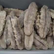 Fresh and dried sea cucumber