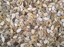 special melon seeds for sale