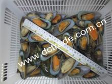 Green Mussel in Half Shell