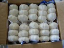 Fresh garlic white/Normal white garlic