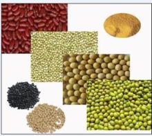 Sugar Beans,Green Mung Beans,Pink Cowpeas,Dried Type Kidney Beans,Pinto Bean