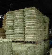 High Protein Sun Dried Alfalfa Hay, Alfalfa pellet.