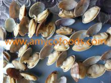 Frozen Short Necked Clam Meat competitive price