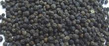Black Pepper 550gl/ 500gl