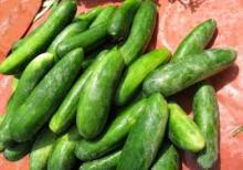 Fresh,Dry and canned cucumber