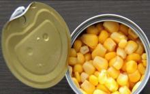 Canned Cream Sweet Corn Kernel Fresh and Good Taste
