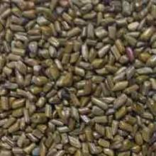 Natural Cassia Tora Seeds