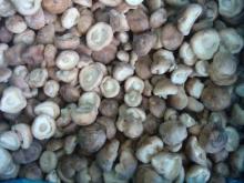 Frozen shiitake,mushroom
