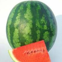 GOOD QUALITY Fresh Watermelon